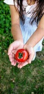 食べ物,子供,女の子,手持ち,トマト,野菜,人物,ポートレート,ライフスタイル,真っ赤,夏野菜,手元,リコピン,抗酸化作用