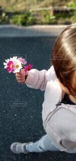 色鮮やかなコスモスを持つ女の子の写真・画像素材[4166622]