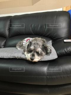 犬の写真・画像素材[239262]