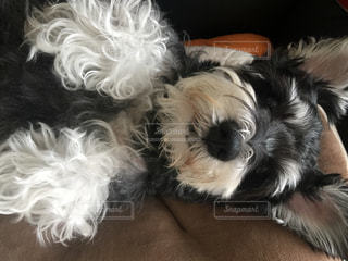 犬の写真・画像素材[239266]