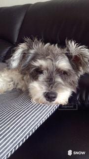 犬の写真・画像素材[245718]