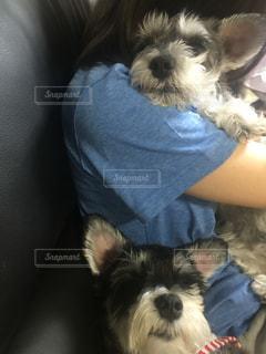 犬の写真・画像素材[245719]