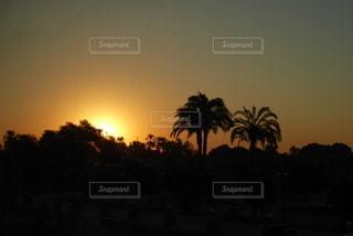 背景に夕日のある木の写真・画像素材[3265341]