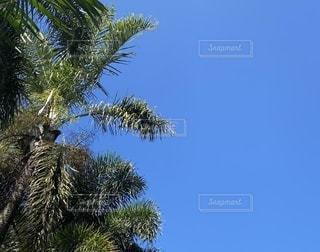 木の隣にあるヤシの木の群の写真・画像素材[3273047]