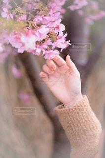花に触れての写真・画像素材[3283323]