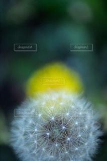 植物のクローズアップの写真・画像素材[3285934]