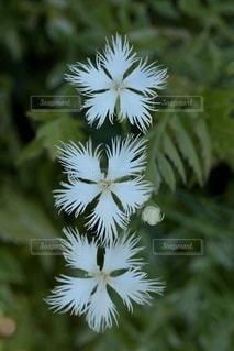 花のクローズアップの写真・画像素材[3286061]