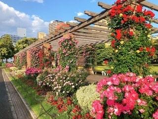 ピンクの花が庭にあるの写真・画像素材[3288739]