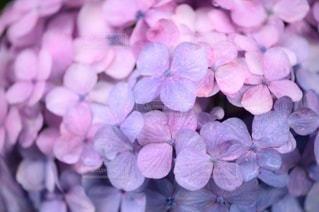 花のクローズアップの写真・画像素材[3357749]