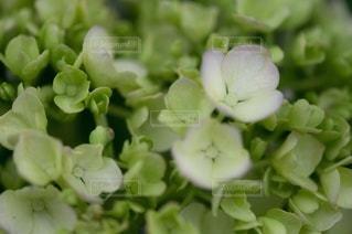 花のクローズアップの写真・画像素材[3357750]