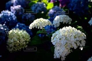 花のクローズアップの写真・画像素材[3389579]
