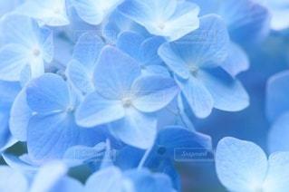花のクローズアップの写真・画像素材[3389591]