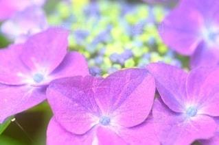 花のクローズアップの写真・画像素材[3389585]