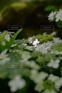 花園のクローズアップの写真・画像素材[3389587]