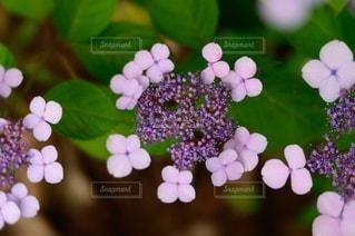花のクローズアップの写真・画像素材[3389594]