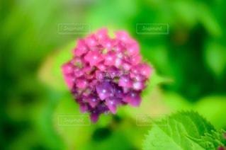 花のクローズアップの写真・画像素材[3389599]