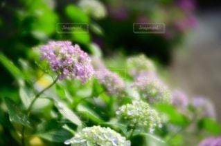 植物のクローズアップの写真・画像素材[3389602]