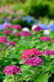 花園のクローズアップの写真・画像素材[3389595]