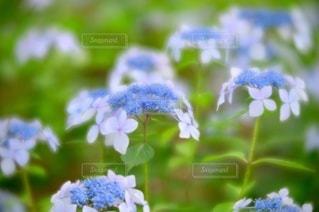 花のクローズアップの写真・画像素材[3389597]