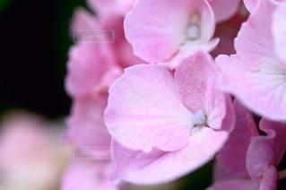 花のクローズアップの写真・画像素材[3389600]
