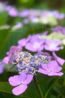 花のクローズアップの写真・画像素材[3389601]
