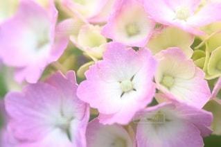 花のクローズアップの写真・画像素材[3389603]