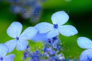 花のクローズアップの写真・画像素材[3389605]