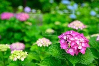 花園のクローズアップの写真・画像素材[3389606]