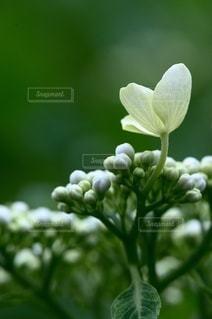 花のクローズアップの写真・画像素材[3389610]