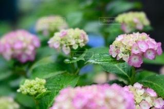 花のクローズアップの写真・画像素材[3389609]