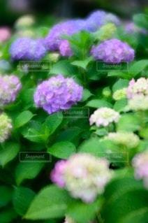 花のクローズアップの写真・画像素材[3389607]