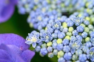 花のクローズアップの写真・画像素材[3389611]