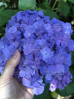 花のクローズアップの写真・画像素材[3389614]