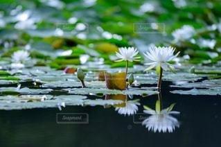池のクローズアップの写真・画像素材[3391608]