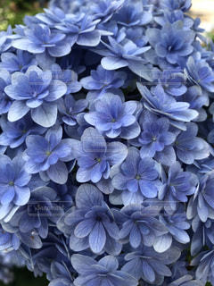 花のクローズアップの写真・画像素材[3392680]