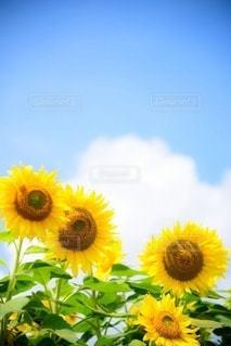 花のクローズアップの写真・画像素材[3586673]
