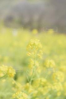 花のクローズアップの写真・画像素材[3586671]