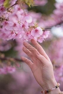 花を持つ手の写真・画像素材[3586709]