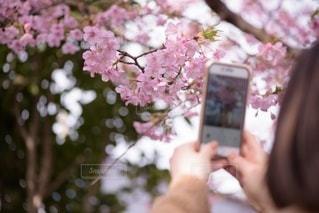 携帯電話を持っている人の写真・画像素材[3588310]
