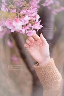 花を持つ手の写真・画像素材[3588311]