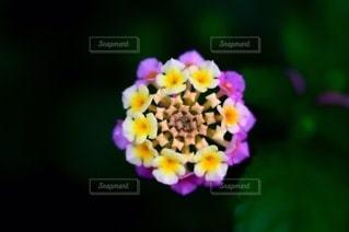 花のクローズアップの写真・画像素材[3588338]