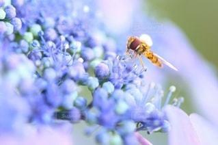 花のクローズアップの写真・画像素材[3588342]