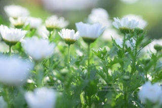 花のクローズアップの写真・画像素材[3595521]