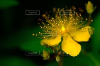 花のクローズアップの写真・画像素材[3595522]