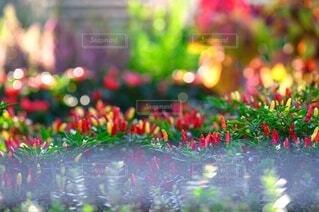 カラフルな花のグループの写真・画像素材[3669308]