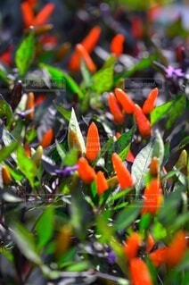 植物のクローズアップの写真・画像素材[3674467]