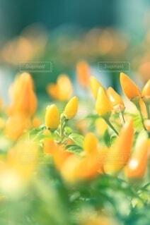 花のクローズアップの写真・画像素材[3674466]