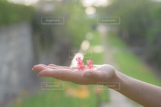 彼女の顔に手を握っている女性の写真・画像素材[3697471]