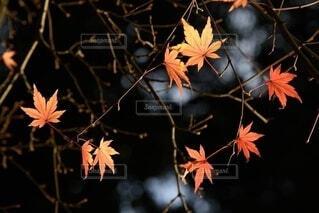 木の枝に花瓶の写真・画像素材[3717202]