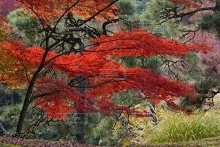 森の中の木の写真・画像素材[3717212]